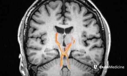 Scientists Produce Ultra-High Def 3D Map of Human Brain Stem