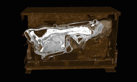 CT Scans of T. Rex Unveiled