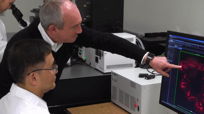 USC, Olympus Partner in Multiscale Bioimaging to Advance Precision Medicine
