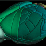 A High-Resolution, 3D Map of the Whole Mouse Brain