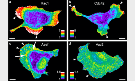 A New Tool to Map the Flow of Info within Living Cells