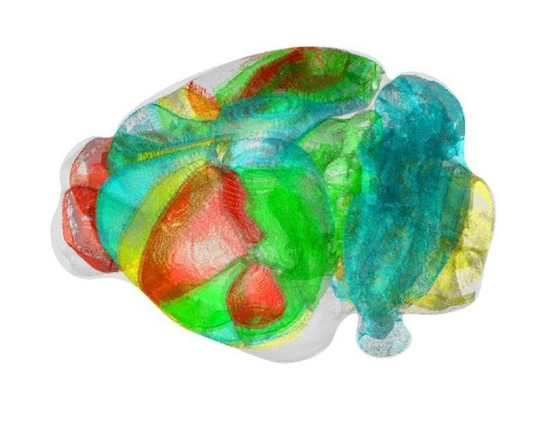 Unravelling Complex Brain Networks with Automated 3D Neural Mapping