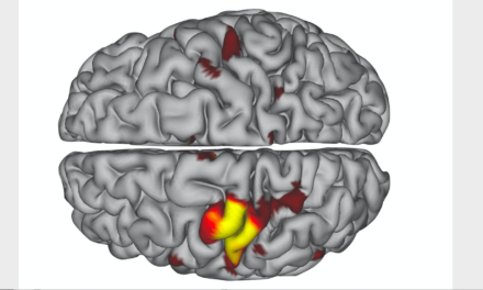 Previously Undetected Brain Pulses May Help Circuits Survive Injury