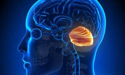 'Little Brain' or Cerebellum Not So Little After All