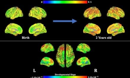 Scientists Show How Brain Flexibility Emerges in Infants