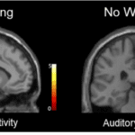 Warning Witnesses of the Possibility of Misinformation Helps Protect Their Memory Accuracy