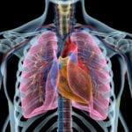 How to Capture Images of Cells at Work Inside Our Lungs