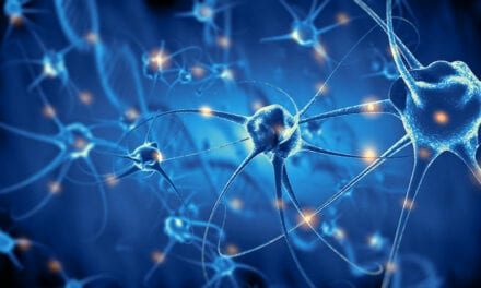 New Tool Activates Deep Brain Neurons by Combining Ultrasound, Genetics