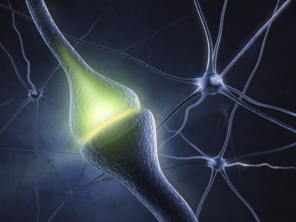 Bioengineers Hit Neurons with Targeted Ultrasound in Approach to Inhibit Pain